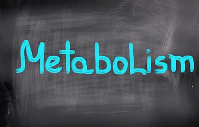 Metabolism on chalkboard